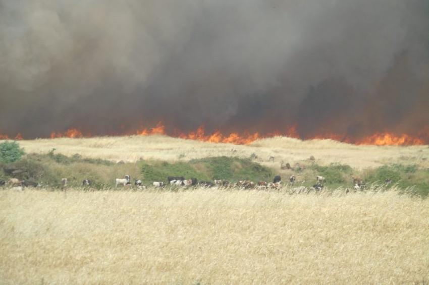 Gaziantepte buğday tarlaları yandı