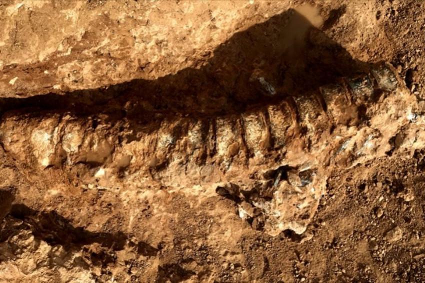 Dünyanın en eski hayvan fosili Kanadada bulundu