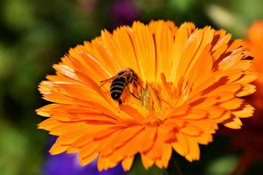 Arı sokmaları ve arı alerjisi hakkında bilinmesi gerekenler