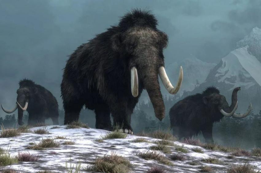 Yünlü mamutlar DNAlarından yeniden doğacak