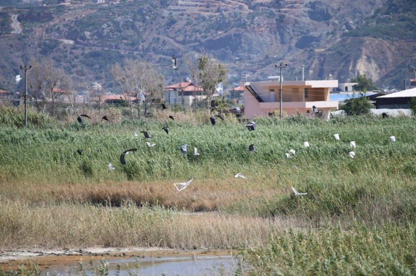 Mileyha Sulak Alanında 3 yeni kuş türü tespit edildi